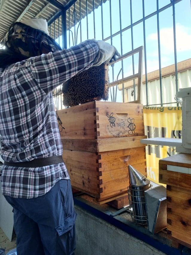 窗臺養蜂。(攝影/楊子樊)
