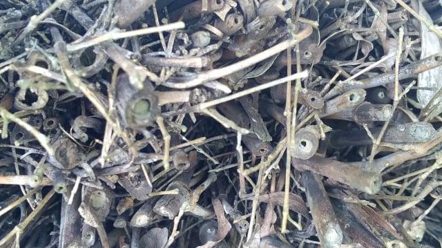 竹子空心的莖,也是獨居蜂選擇居住的場所。(攝影/楊子樊)