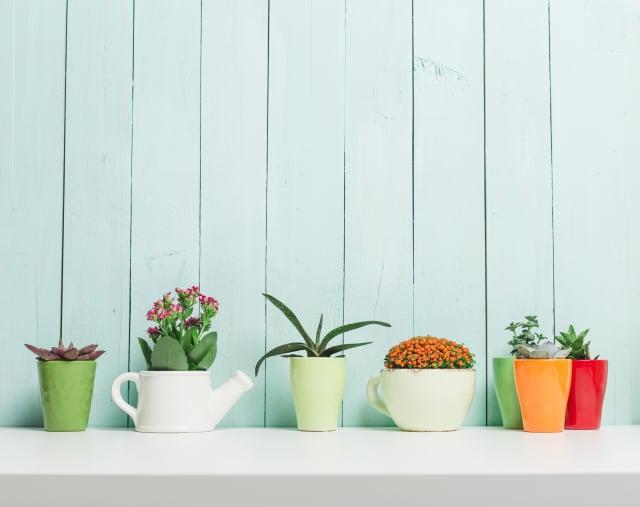 不同種類的植物,適合不同星座的人!(Fotolia)