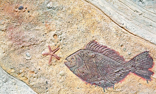 從所有活化石的身上,我們看到的是物種染色體的恆定性,看不到任何進化在它們身上發生。(123RF)