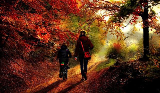 圖為一對走在秋天樹林裡的母女,示意圖。(Pixabay)