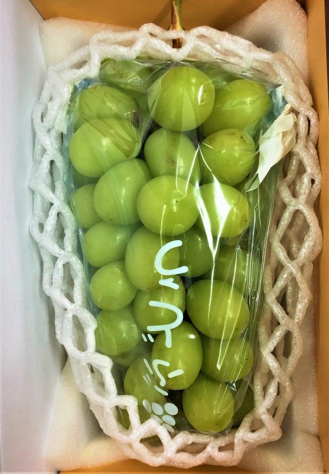稀有的綠寶石葡萄1公斤可賣到200元以上,這是果農努力種植的好成績。(黃俊仕提供)
