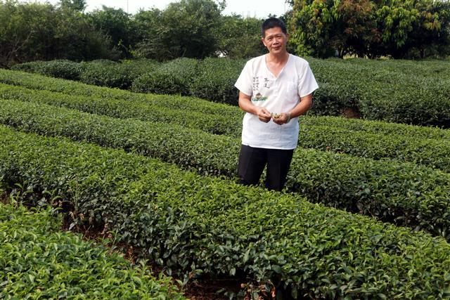 「綠野茶園」李振福說,以他40幾年製茶經驗,認為冬山紅茶最大特色是它的「花香」。(攝影/曾漢東)