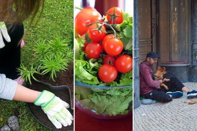 女孩5歲開始種菜,9歲蓋房子。她希望帶給無家可歸者溫飽。圖為示意圖。(Pixnio/ Pxfuel/ Pikrepo)