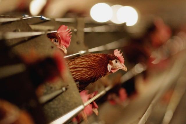 中共內蒙古阿拉善盟額濟納旗去年曾爆發一例人感染H7N9禽流感病例。(Getty Images)
