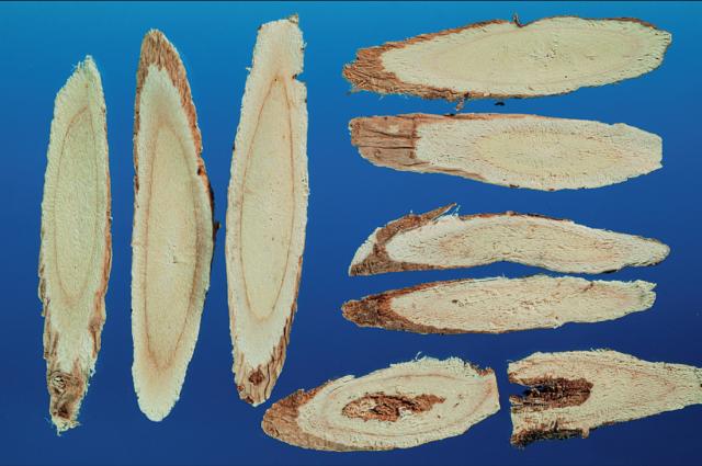 5.蒙古耆(左)、山西北耆片(右)。(張賢哲教授《道地藥材圖鑑》提供)