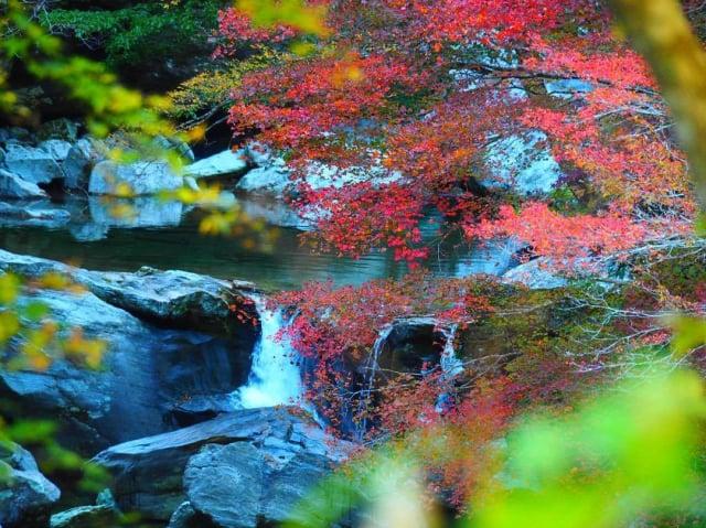 瀨戶川流域溪谷是許多人喜歡前往的賞楓名所。(高知縣提供)