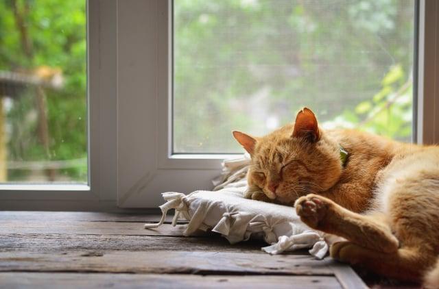 貓喜歡趴在有陽光的地方睡午覺,多在這些地方擺枕頭或軟墊,牠就會開心享用。(Shutterstock)