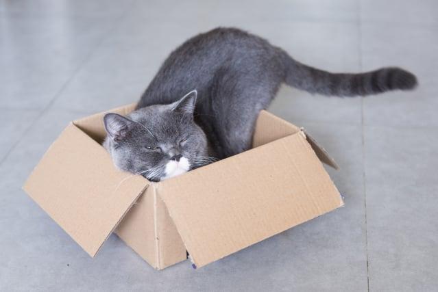 貓喜歡窩在紙盒裡。(Shutterstock)