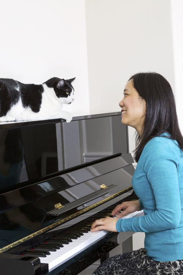 貓喜歡爬高,鋼琴上面也是牠喜愛的場所之一。(Shutterstock)