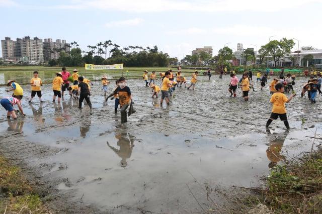 百位竹林國小學童們,赤腳踩在水稻田裡插秧體驗。