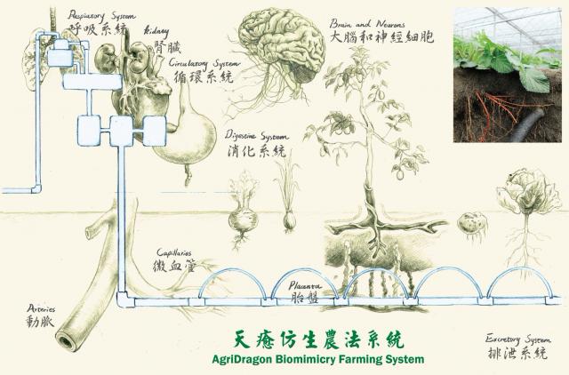模擬人體系統運作,突破地下灌溉瓶頸。(興藝峰生技農業提供)