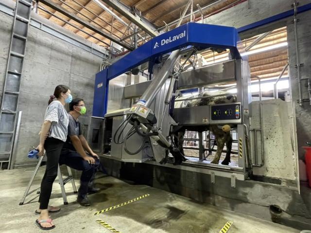 豐樂牧場,自動榨乳機器人。(豐樂牧場提供)