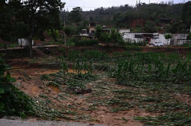 圖為河南鄭州水災過後的玉米田。(JADE GAO/AFP via Getty Images)