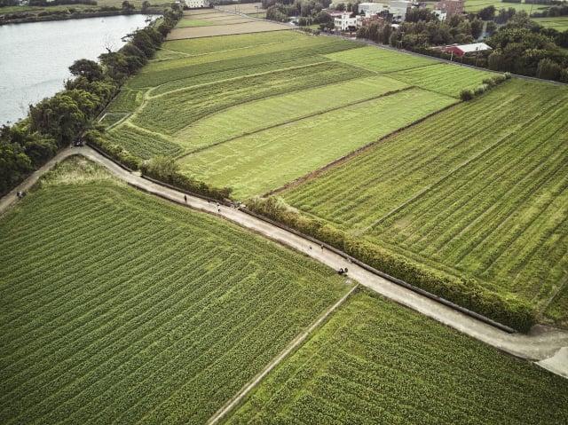胡真萍組織的產銷班種植了七、八十甲的黑豆。(張晏甄提供)