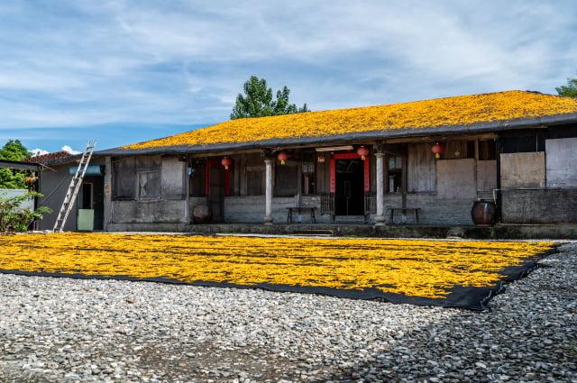 採摘鋪曬金針花形成金黃地毯。(Airbnb提供)