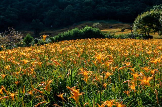 中央山脈的長青翠綠和花東縱谷的心曠神怡飽覽無遺。(Airbnb提供)