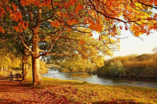秋天是收成的節氣,秋分總陰陽之和的精華;生命臨秋也以「養收」為保生,養收以保「和」。秋分,天人合一共此時,誠然「天涼好個秋!」(Fotolia)