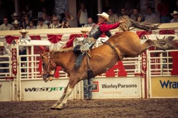 牛仔競技是牛仔節上的重頭戲。(取自卡爾加里牛仔節)