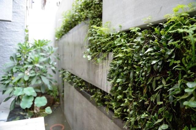 每層都有的植栽牆,厚達20公分,將植栽先行栽種於蛇木上,再鎖進牆內,並設有定時灑水器,即使屋主出國也不用害怕植物枯萎,是麗晨建設的獨家設計。(記者蘇玉芬/攝影)