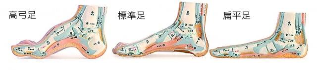 足弓是腳內側呈弧狀的部分,可分為高弓足、標準足、扁平足。(富足生醫提供)