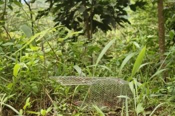 盜獵者在社寮山區放置的捕龜籠。(記者林萌騫/攝影)