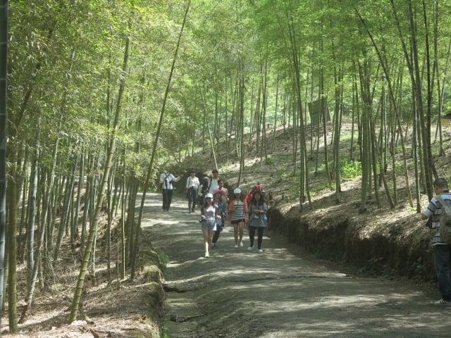 往天梯的道路有一段平緩的竹林小徑。(攝影/鄧玫玲)