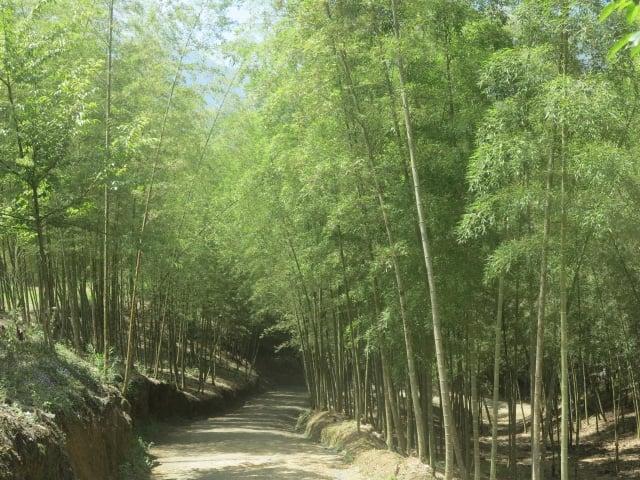 走在孟宗竹林裡,感覺特別幽靜。(攝影/鄧玫玲)