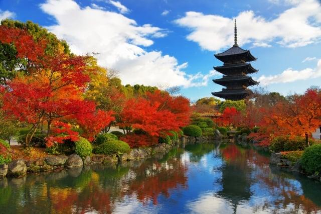 日本京都的東寺寶塔。(Fotolia)