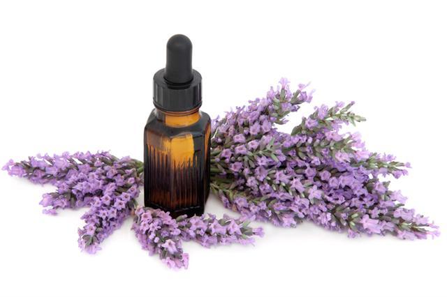 薰衣草精油對於壓力、失眠、焦慮、疼痛等症狀都有明顯療效。(fotolia)