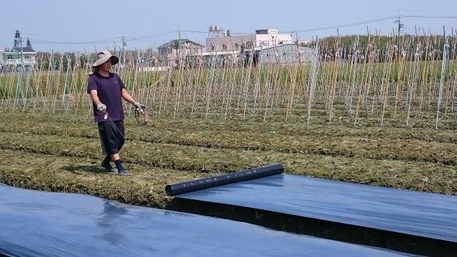 不噴灑農藥的栽種方式用有機資材來「除草」。(吳家晴提供)