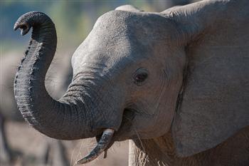 非29國警告:大象將於25年內從非洲大陸滅絕
