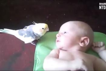 大選日爸媽去投票 聽鸚鵡唱民謠逗寶寶