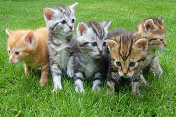 貓和狗比,誰聰明?日本科學家這麼說