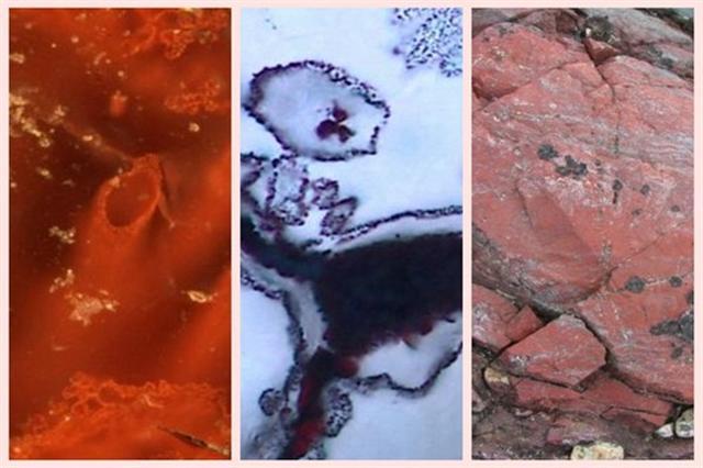 科學家在加拿大海岸發現37.7億至43億年歷史的微生物化石。(新唐人合成)