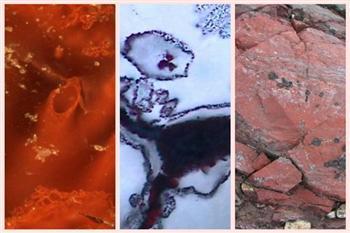 43億年前的地球生命長啥樣?研究人員發現微生物化石