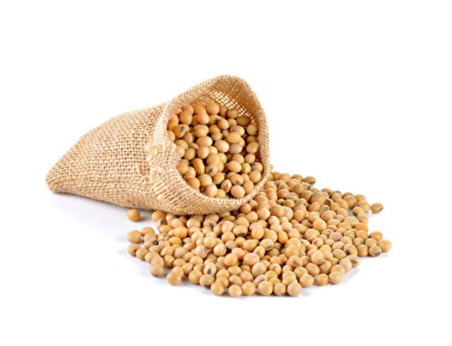 黃豆(Fotolia)