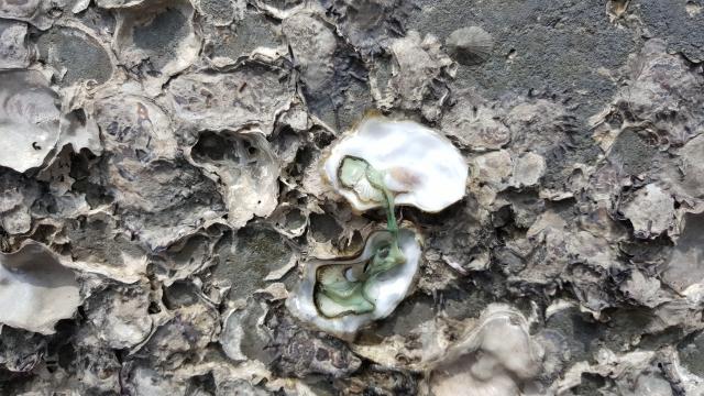 大潭藻礁(桃園在地聯盟提供)