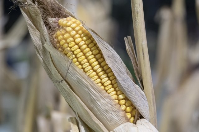 植物種子可以決定自己何時、何地發芽。(AFP)