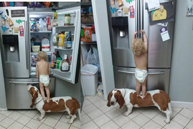 蹣跚學步的小娃兒Maverick,和家中的寵物狗狗Leroy組成最佳拍檔,成功打開冰箱門,找尋好吃的食物。(Rob Herbert臉書截圖)