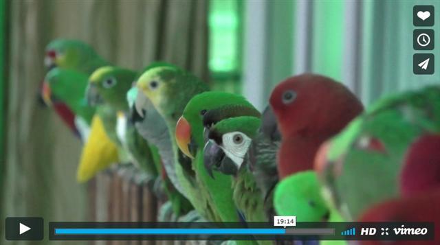 鳥園內有各式各樣的鳥。(影片擷圖)