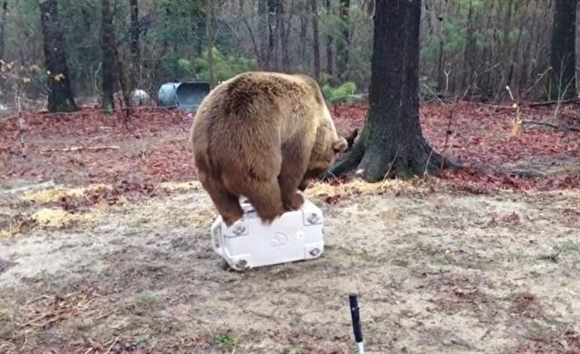 這隻冷藏箱耐受助理灰熊1小時的蹂躪。(影片截圖)