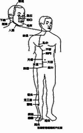 足陽明胃經經絡穴位圖(Fiona 繪製)