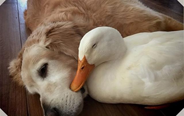 魯迪和巴克萊依偎在一起睡覺。(影片截圖)