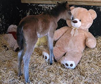 微風給鈕扣一個吻,好可愛!(The Mare & Foal Sanctuary/Facebook)