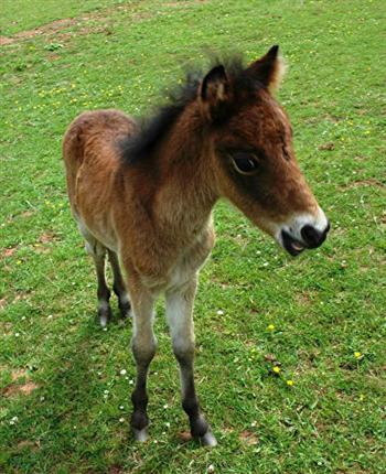 到三週大的時候,「微風」已經變得活力十足!(The Mare & Foal Sanctuary/Facebook)