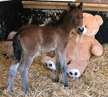 (The Mare & Foal Sanctuary/Facebook)