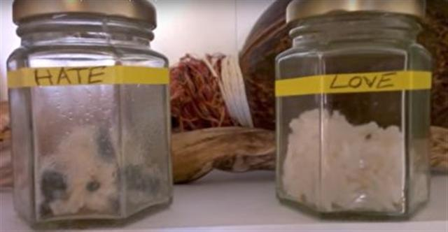 米飯第九天的變化。(影片截圖)