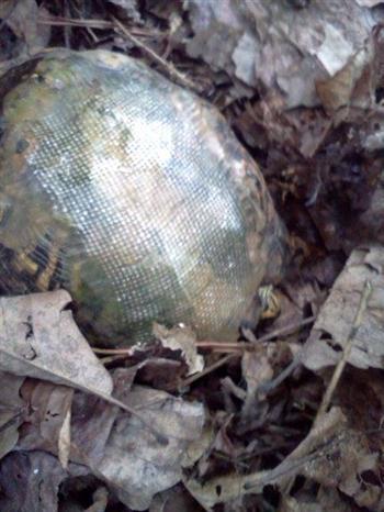 車禍導致龜殼破裂,有了玻璃纖維製成的龜殼,烏龜健康活著。( Hocking Hills Animal Clinic臉書)