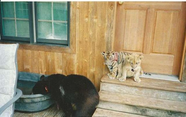 (Noah's Ark Animal Sanctuary: home of the BLT/Facebook)
